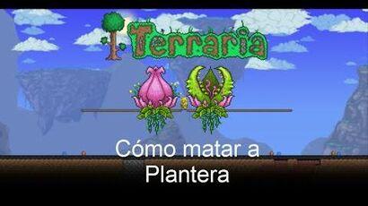 Cómo matar a Plantera Terraria 1.2.4