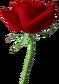 Kras roza03