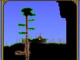 Громадное дерево