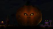 Тыква-гигант