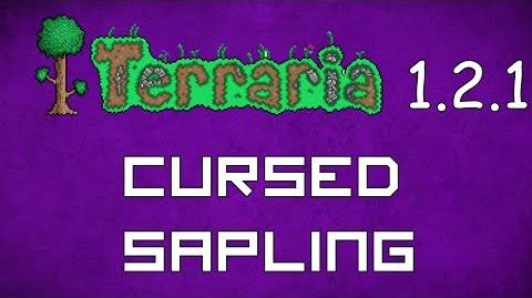 Cursed Sapling - Terraria 1.2.1 Guide New Pet!
