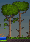 Overground Jungle Trees