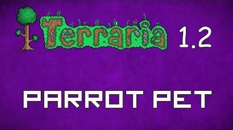 Parrot - Terraria 1