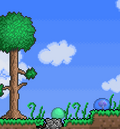 Slimes in forest