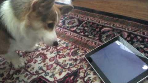 A Dog Tests the iPad - Tested.com
