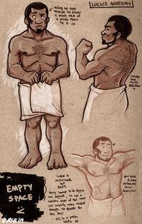 Lucius anatomy
