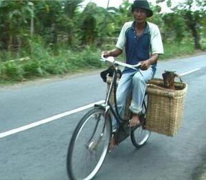 Bike goats