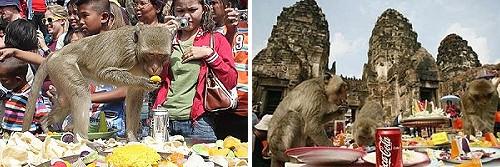File:Monkey buffet.jpg