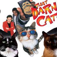 watch that darn cat 1997 online free