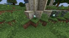 Shimmerleaf In Natural Habitat