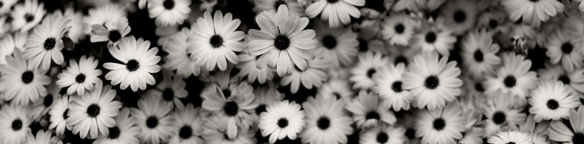Flower size tumblr erkalnathandedecker image black and white background tumblr flowers mzqin2bq jpg the mightylinksfo