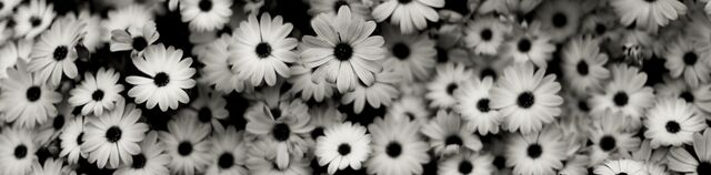 File Black And White Background Tumblr Flowers Mzqin2bq