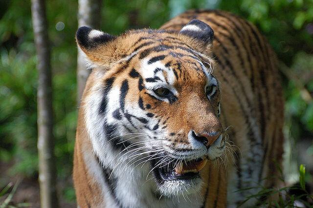 File:Felidae.jpg