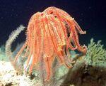 Crinozoa