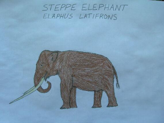 Steppe Elephant