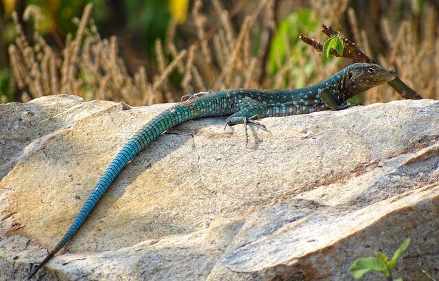 File:Reptilia.jpg