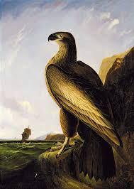File:Washington's Eagle.jpg