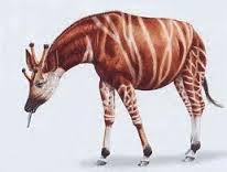 File:Giraffokeryx.jpg