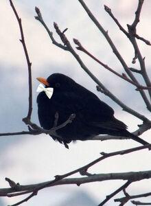Metabird
