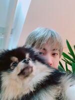 Jin Twitter Feb 2, 2019 (3)