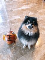 Yeontan | BTS Wiki | FANDOM powered by Wikia