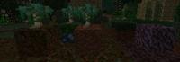 Weedwood Tree Sapling