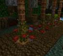 Aspectrus Plant