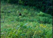 Kentucky-bigfoot