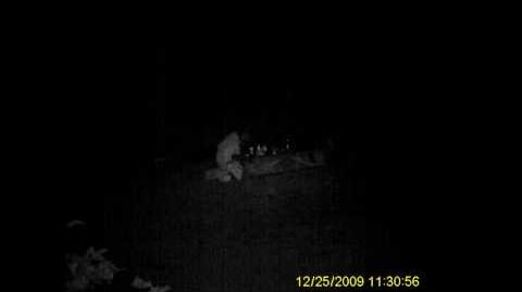 "Unknown ""Creature"" Captured on Camera on Washington State Expedition"