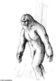 Normal bigfoot yeti sketches 07