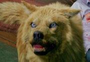 Blonewolf