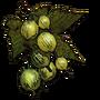 Gooseberry01 icon