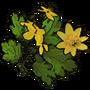 Celandine01 icon