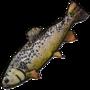 Fish01 iconTest2