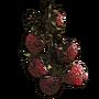 Raspberry01 icon