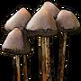 Shrooms01 icon-0