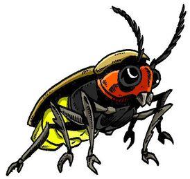 Thunder bug profile