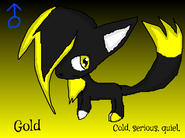 Gold the Cat