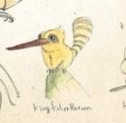 Kingfisherraccoon