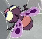 Gnatfly