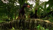 Elopteryx on dead Tarascasarurus
