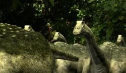 Magyarosaurus herd