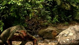 Bloody Allodaposuchus