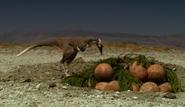 Alvarezsaurus' raiding nest