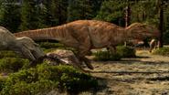Carcharodontosaur male length