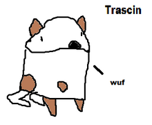 Trascin