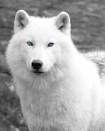 11c62c2dafa39bc2a78dc5d0c55a9b64--white-wall-art-arctic-wolf-2
