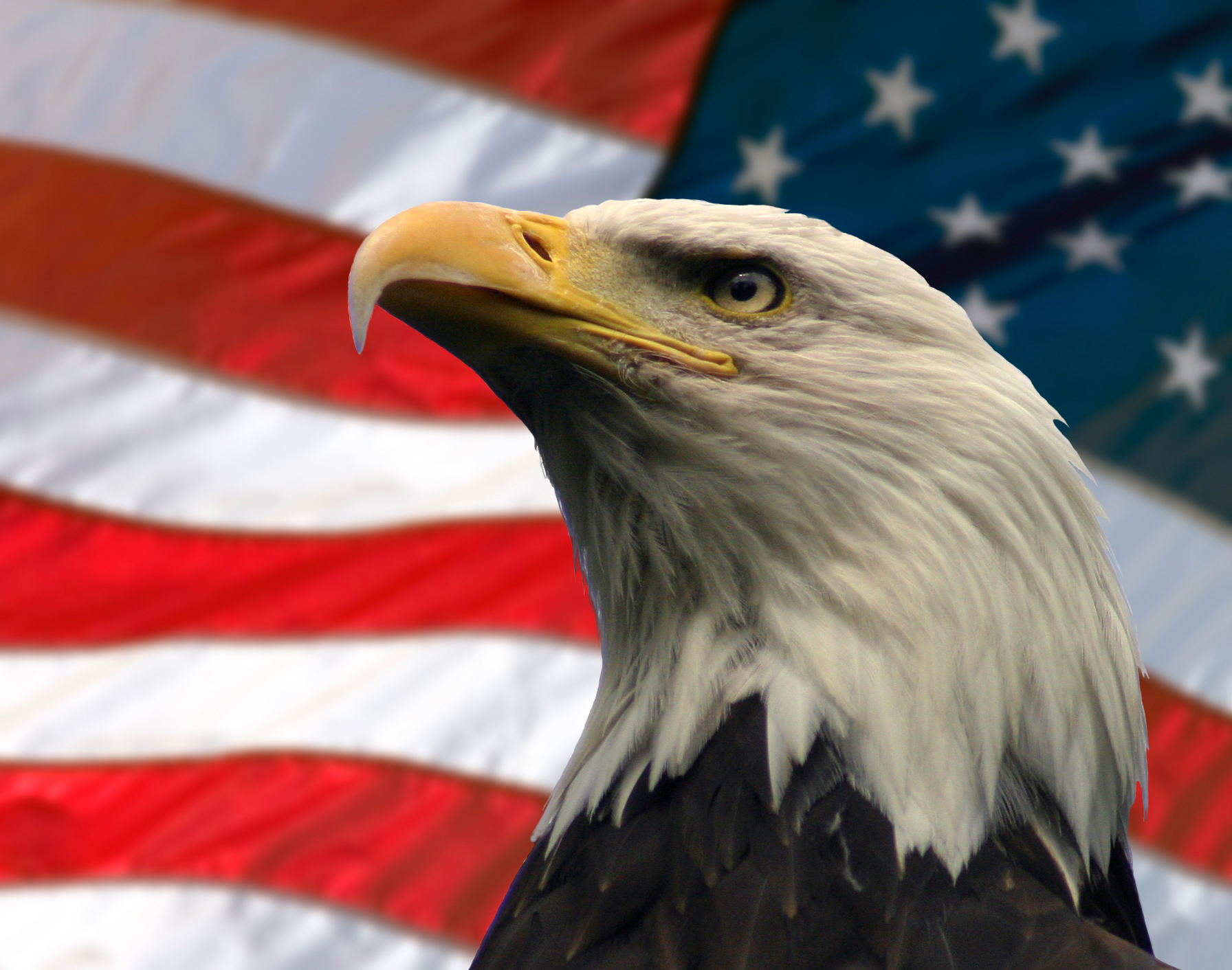 image bigstockphoto american eagle 239566 jpg the drunken
