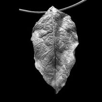 Frosted-silver-leaf-pendant-tindale-300x300