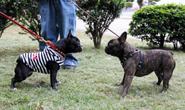 TangoBulldogs